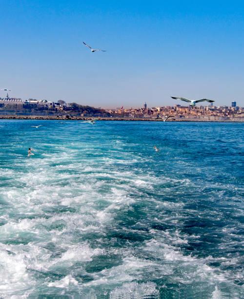 deniz, şehir ve martı. - serpilguler stok fotoğraflar ve resimler