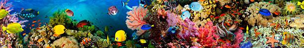 sea corals. panorama. - under the sea fish foto e immagini stock