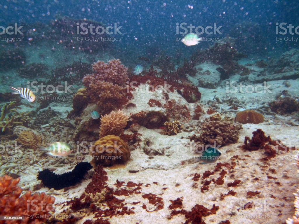 Sea Cucumber At Redang Islands Tropical Underwater Scenes Stock ...