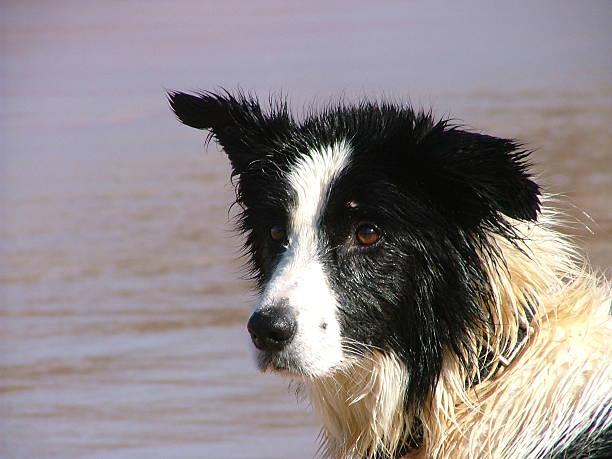 Sea Dog stock photo