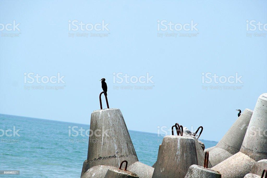 Sea dreams royalty-free stock photo