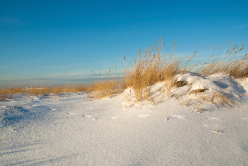 Sea dunes covered with snow