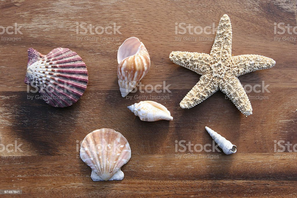 sea dweller royalty-free stock photo