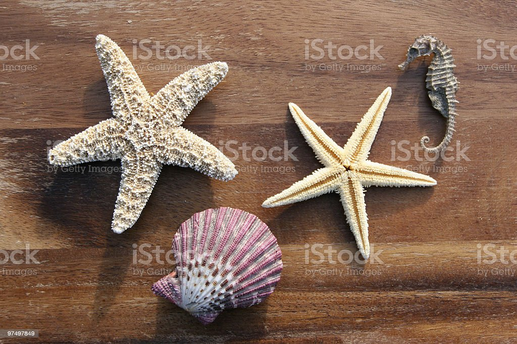 sea dweller royalty-free stock photo