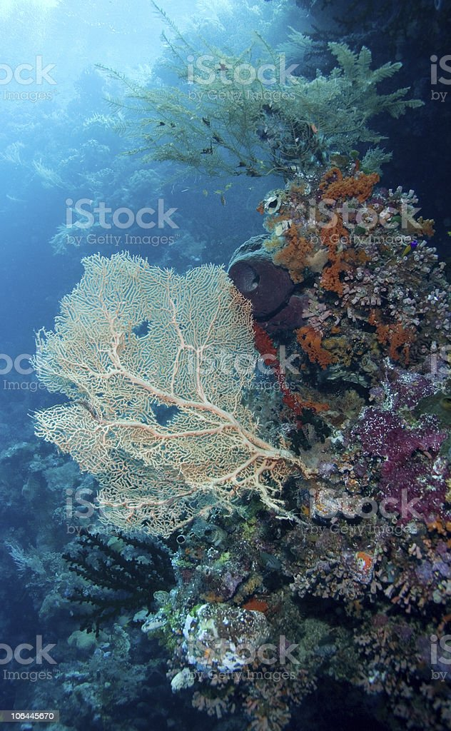Sea Fan and coral stock photo