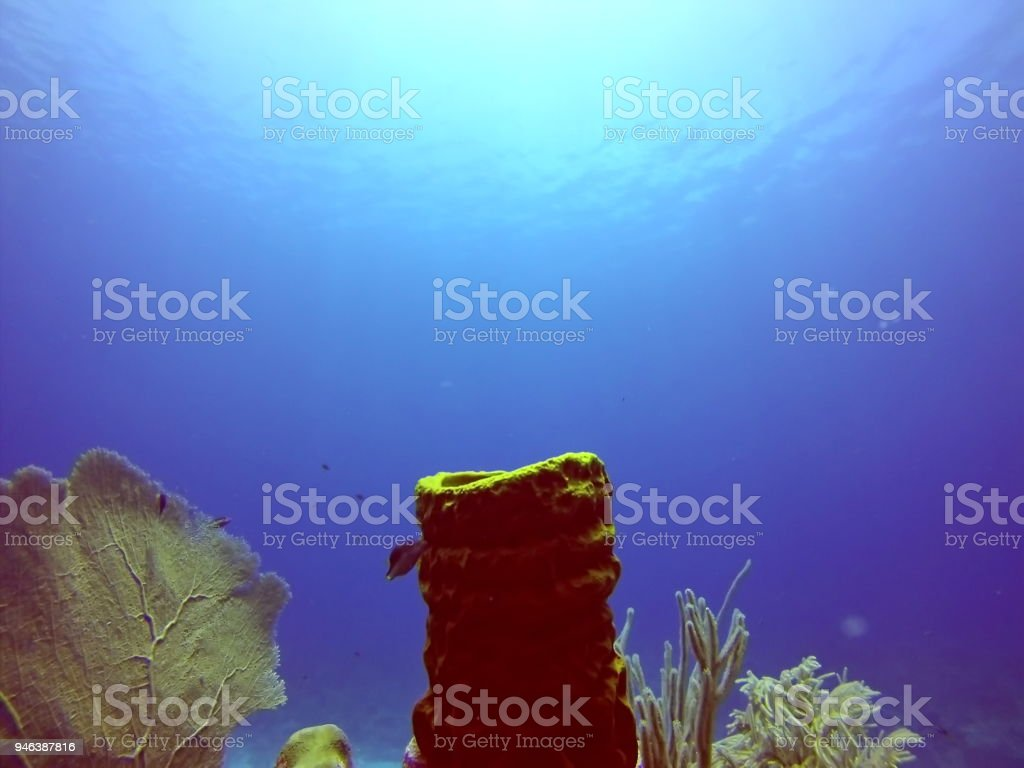 Sea fan and tubular coral in deep water stock photo