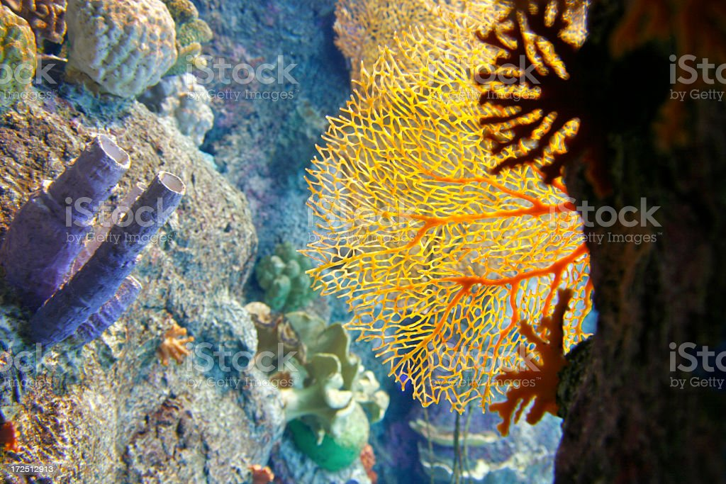 Sea Fans and Coral Fingers royalty-free stock photo