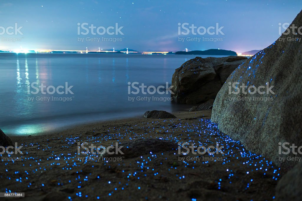 Sea fireflies stock photo