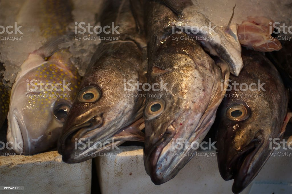 Sea fish at the market royalty-free stock photo