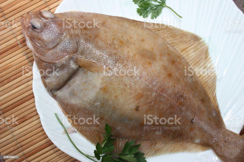 Sea fish carrelet stock photo