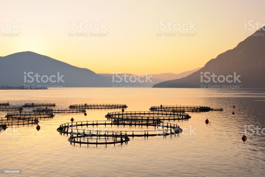 Sea fish farm in Greece at sunrise stock photo