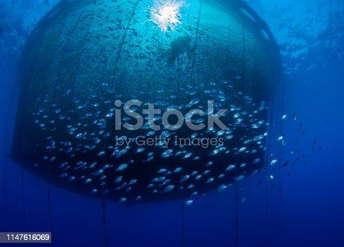 istock Sea fish farm 1147616069
