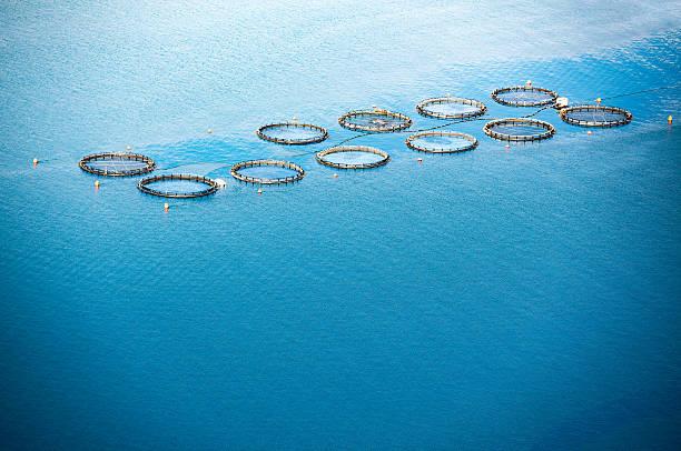 Criadero de pescado del mar - foto de stock