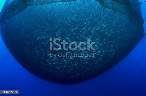 istock Sea fish farm 866299180