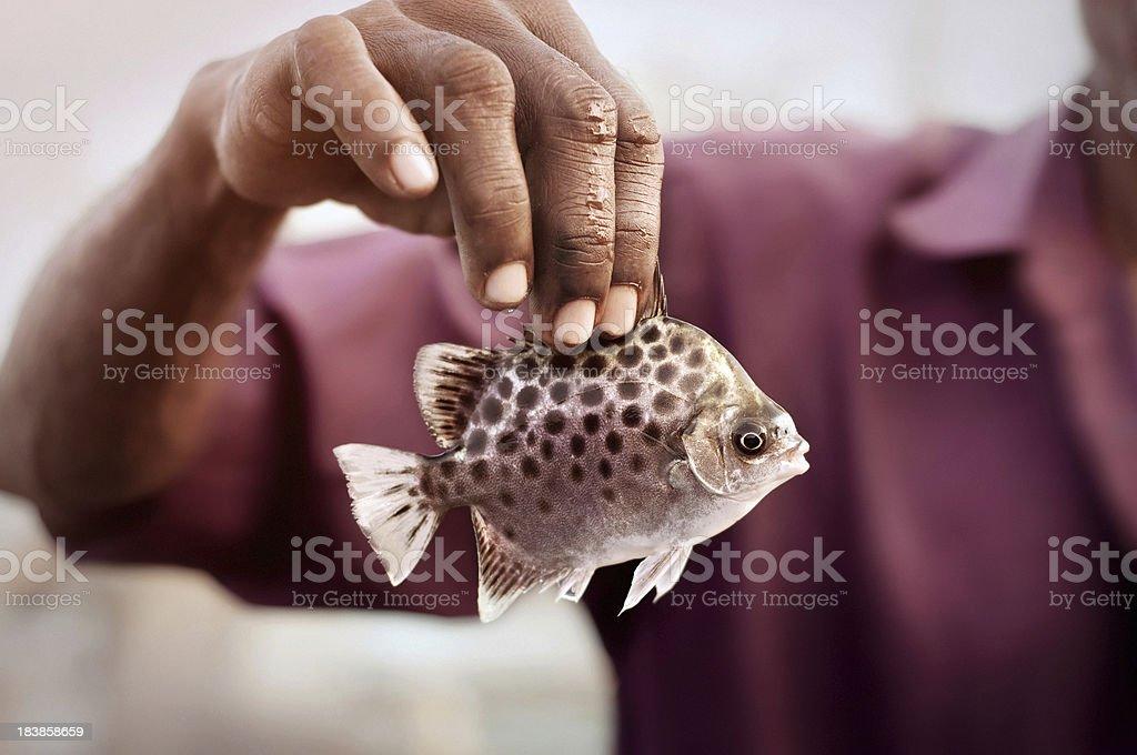 Sea fish in hand stock photo