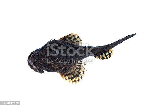 istock sea fish lophius piscatorius 680984572