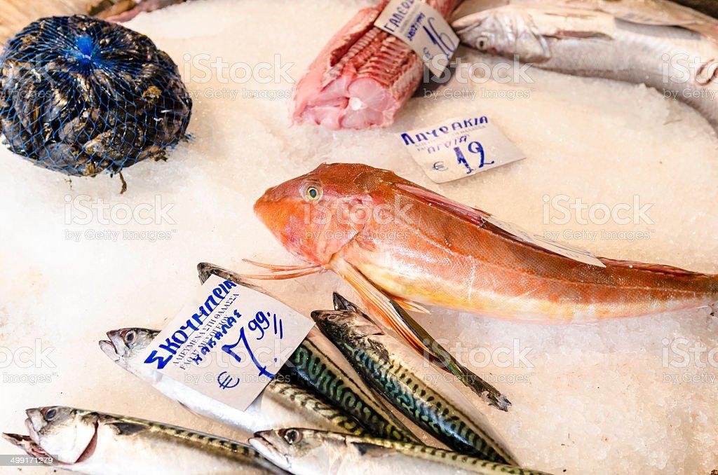 Sea fishes. stock photo