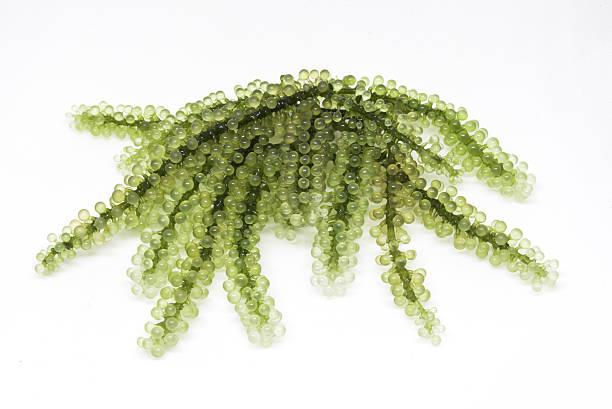 Seetrauben isoliert auf weißem Hintergrund – Foto