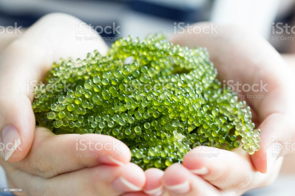 Sea grapes in heart dish on woman hands stock photo