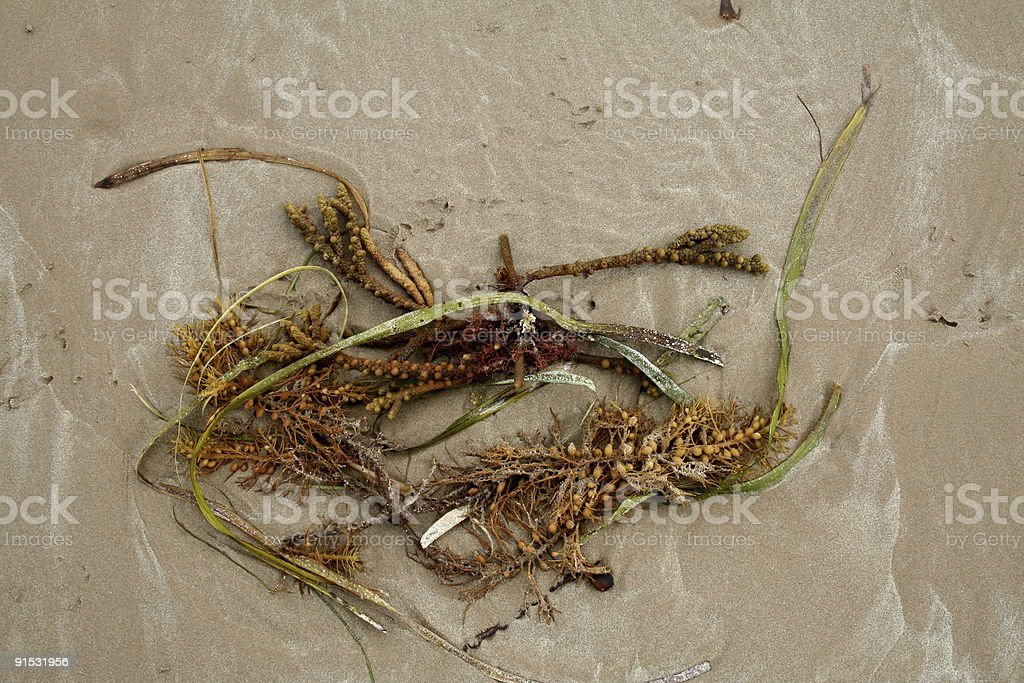 Sea grass on a sandy beach stock photo