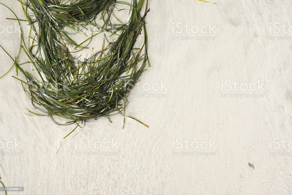 Sea grass on the beach royalty-free stock photo