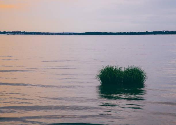 Sea Grass stock photo