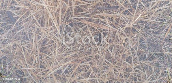 istock Sea grass, pink water vegetation 1154451804