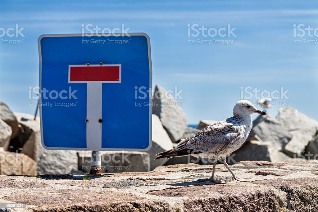 Sea gull and traffic sign stock photo