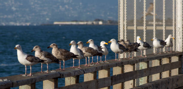Meeresmöbel am Pier 39 in san francisco c ■ nia usa america – Foto