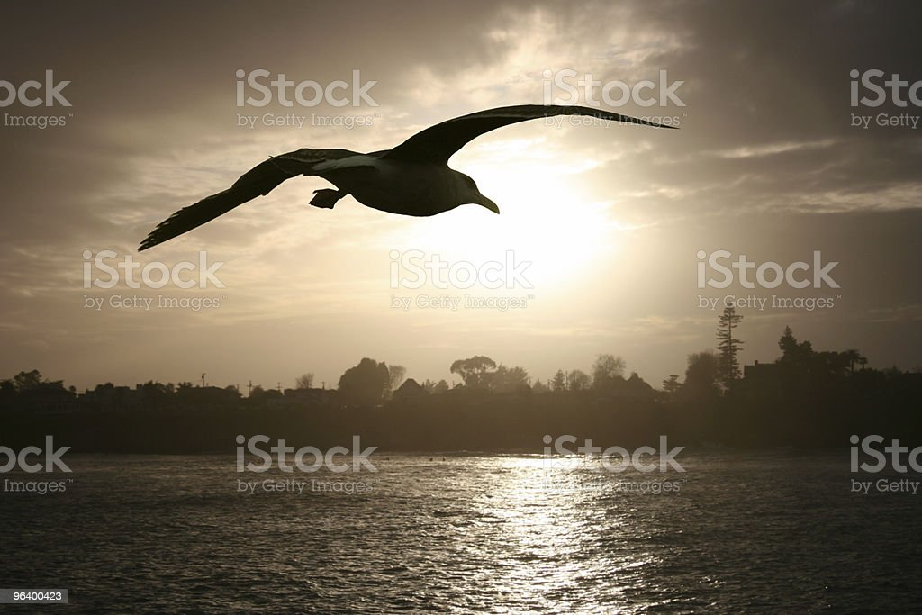 Sea gull at sunset royalty-free stock photo