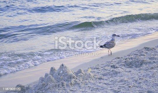 Sea gulls on a sandy beach near the waves. In summer.