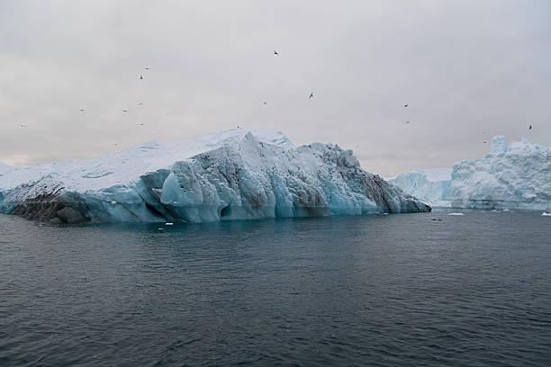 Sea gulls over iceberg stock photo
