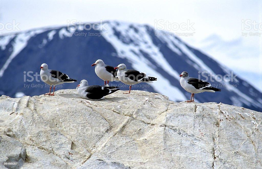 Mare gulls seduto su una roccia foto stock royalty-free