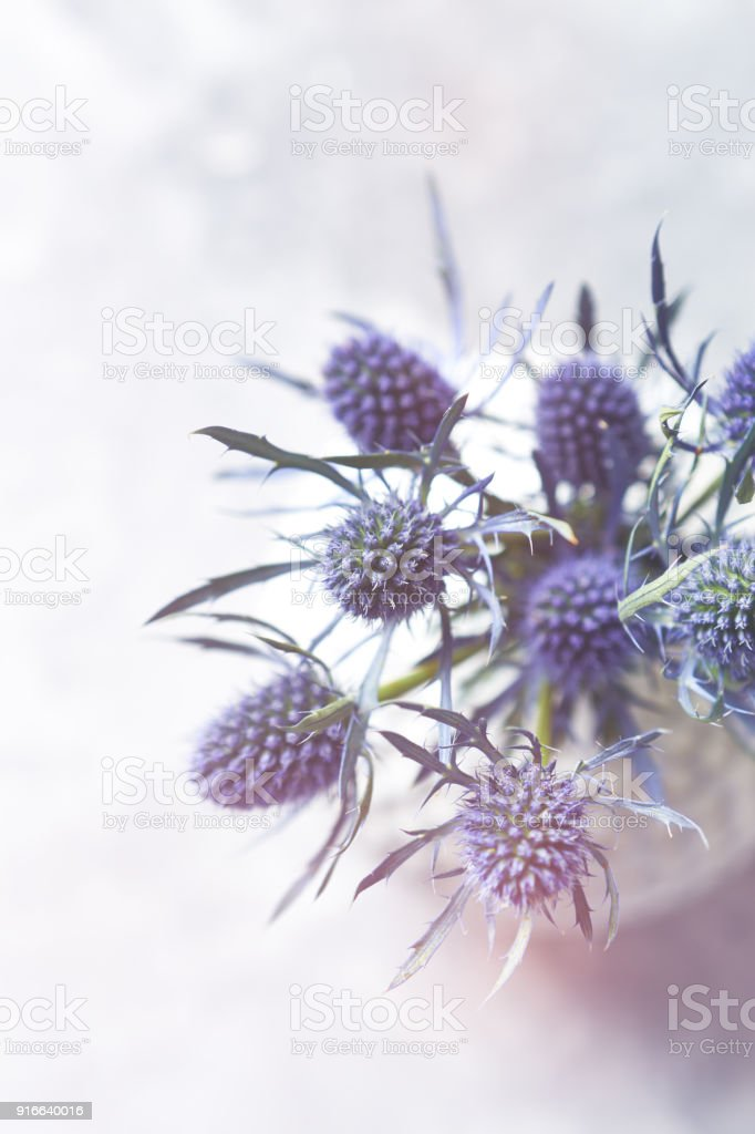 Sea Holly Flowers In A Vase Stock Photo More Pictures Of