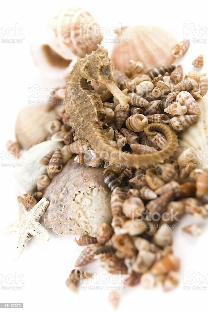 sea horse on shells royalty-free stock photo
