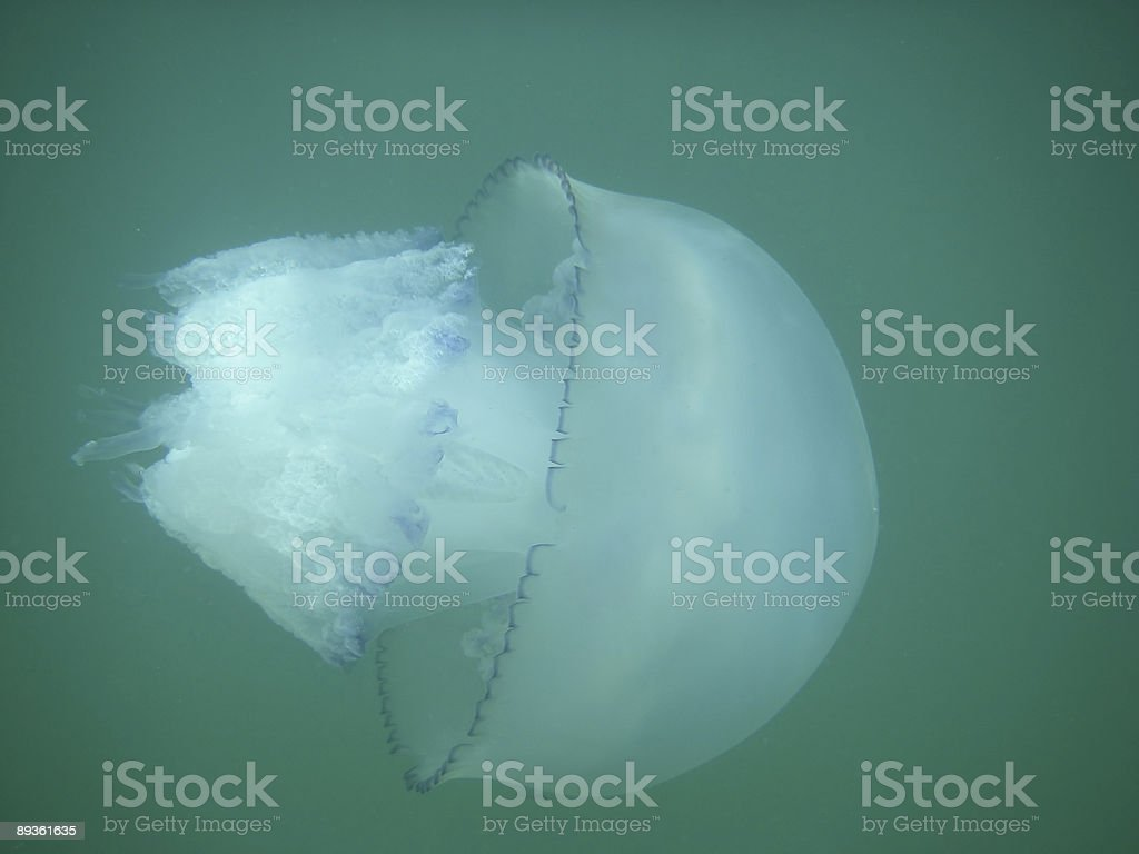 海のクラゲ ロイヤリティフリーストックフォト
