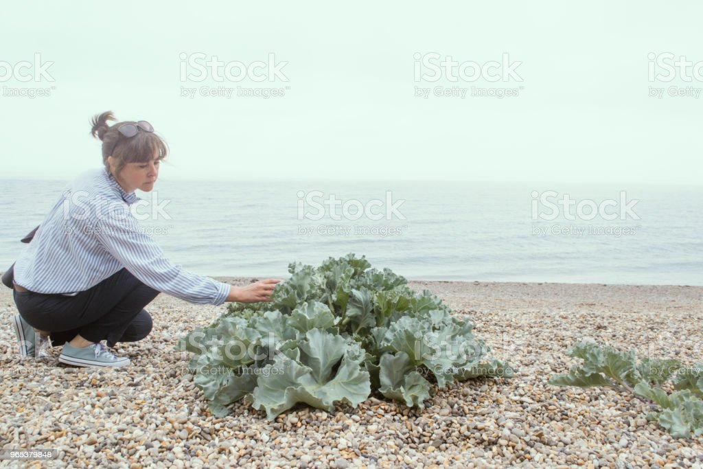 Sea Kale royalty-free stock photo
