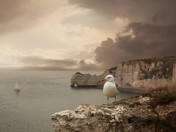 sea landscape with stone bridge, ships and seagull - english channel stock pictures, royalty-free photos & images