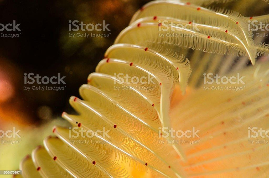 Sea Life 1 stock photo