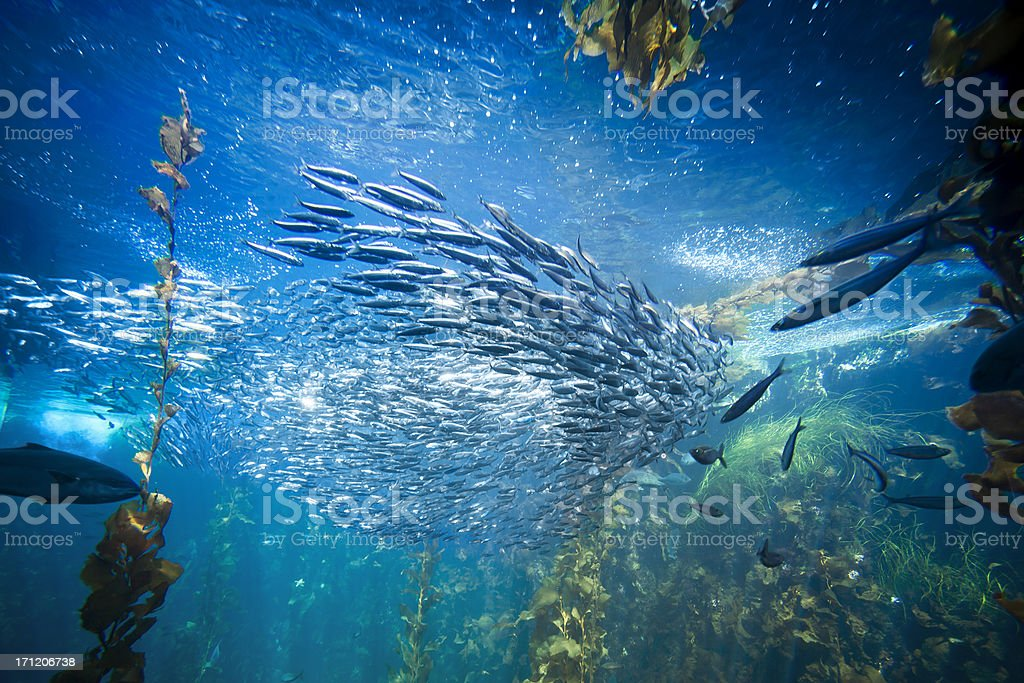 Sea life and fish underwater stock photo