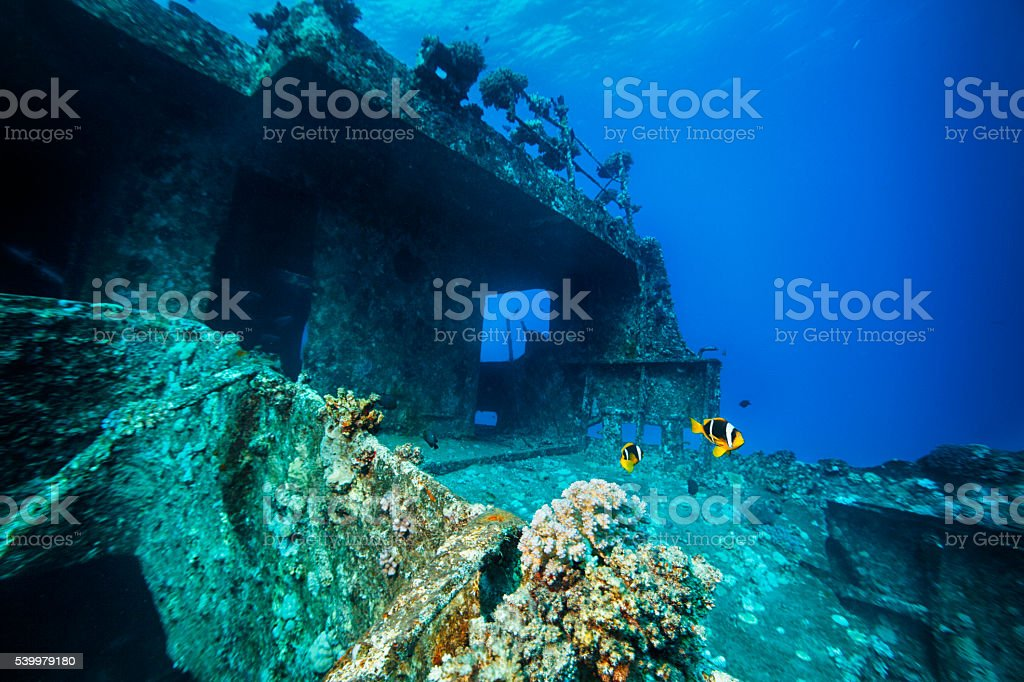 Sea life  anemone clownfish    Shipwreck Diving stock photo