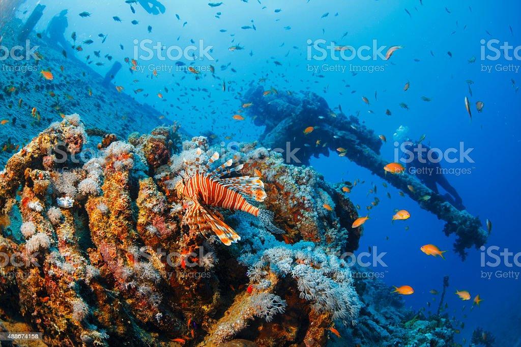 Sea life coral and lionfish fish    Shipwreck Diving  SS Thistlegorm stock photo