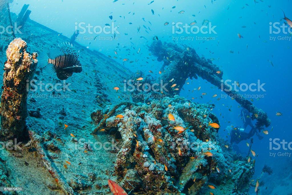 Vida do mar de coral e Peixe-leão Mergulho de exploração de naufrágio SS Thistlegorm peixe foto de stock royalty-free