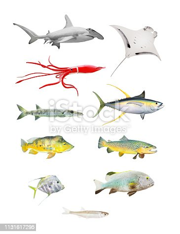 istock Sea life great set. Hammerhead shark, Manta Ray, Squid, Barracuda, Yellow Fin Tuna, Bass Fish, Salmon, Grouper and Sardine isolated on white background. 1131617295