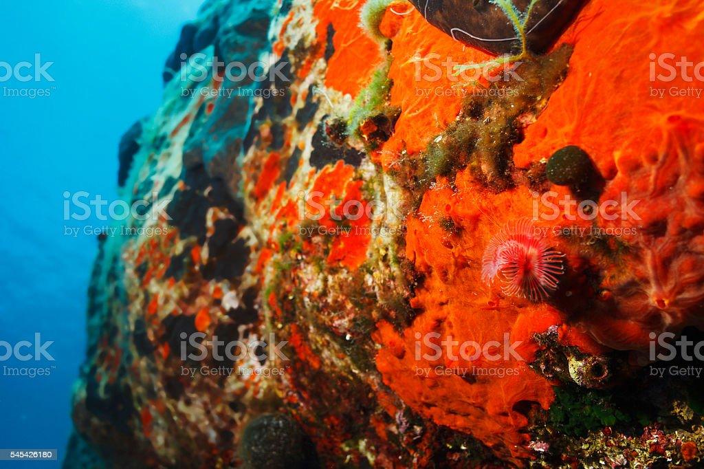Sea Life Live Sea Sponge And Red Tube Worm Underwater Stock Photo ...