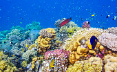 Beautiful Coral reef with with lot of tropical Fish / Marsa Alam - Egypt