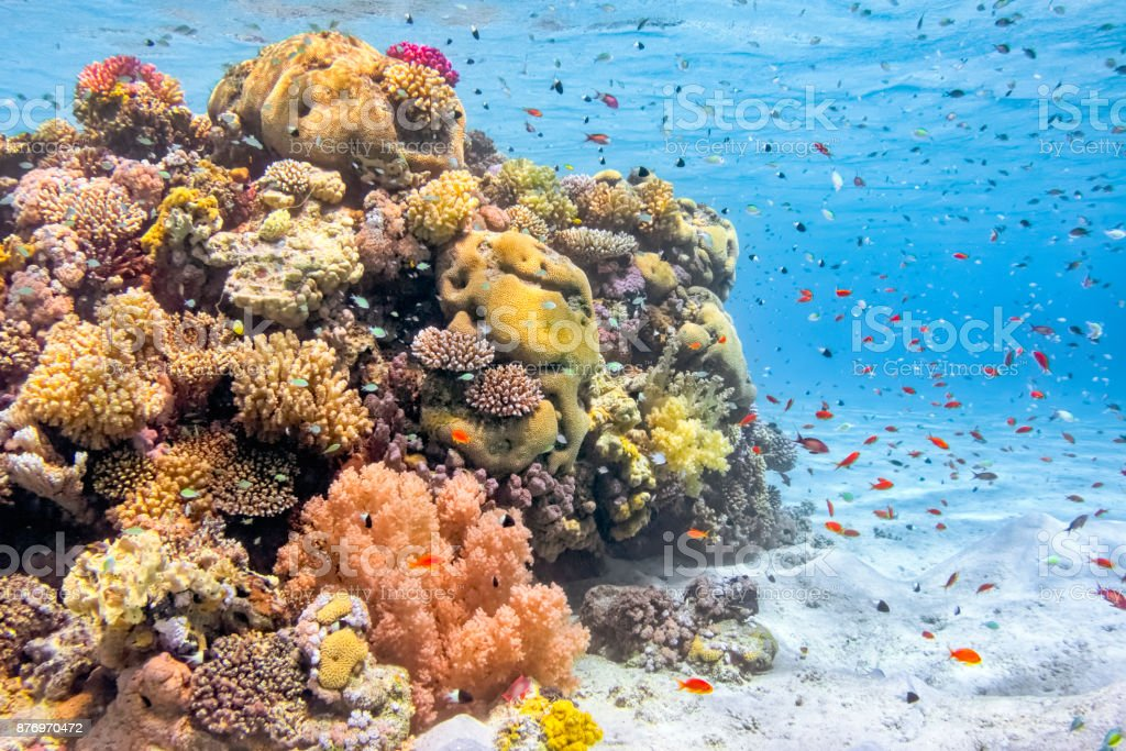 Sea life on beautiful coral reef with lot of tropical Fish in Red Sea - Marsa Alam - Egypt stock photo