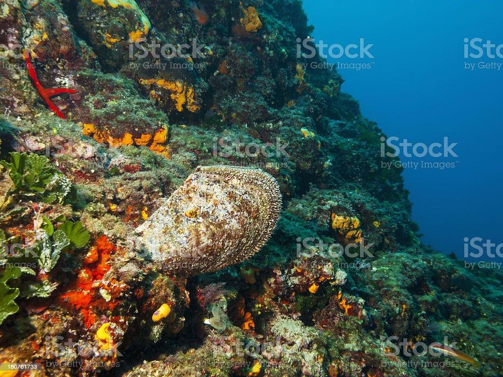 Vida no Mar - fotografia de stock