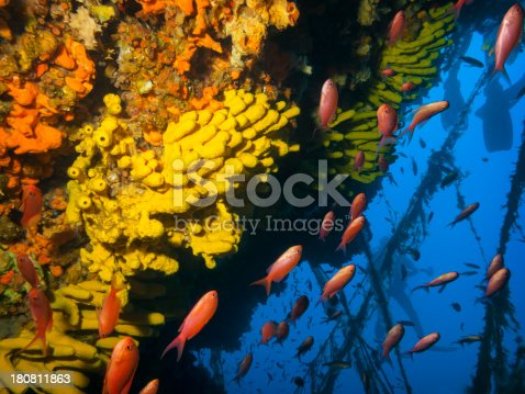 istock Sea life 180811863