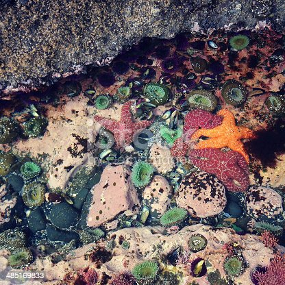 Tide pool life.  Sea stars, sea urchins, sea anemones, chiton, and more.  Photo captured with an iPhone.